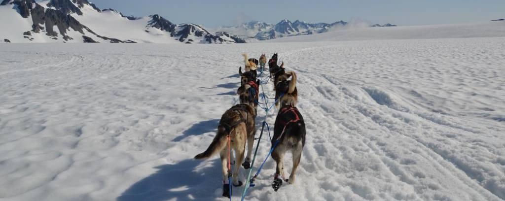 viatges a Alaska, trineus de gossos huslies
